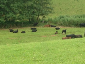 The Herd by the Stream